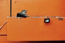 Cat On Orange Brick Wall