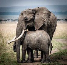 Female Elephant With Baby Elephant