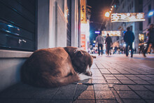 Dog Sleeping On Footpath In City
