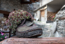 Close-up Of Old Boot And Succulent Plant On Rock