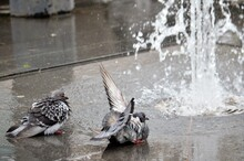 Close-up Of Birds In Fountain