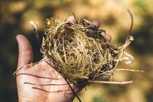 Close-up Of Hand Holding Bird Nest