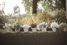 View Of White Flowers On A Balcony