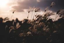 Grass Field, Natural Background - Vintage Retro Filter Effects