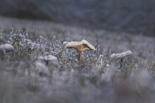 Close-up Of Mushroom On Field During Winter