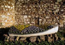 Flowering Plants In Boat Against Wall