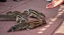 Full Frame Shot Of Human Hand Feeding Squirrels