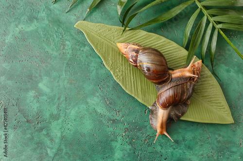Slika na platnu Giant Achatina snails, plate and tropical leaves on color background