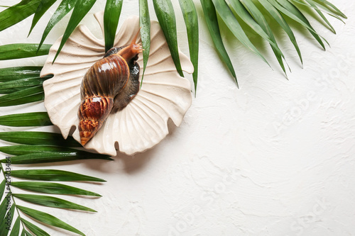Foto Plate with giant Achatina snail and tropical leaves on white background