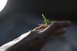 detalle hojas mano naturaleza