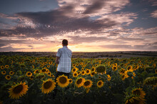Rear View Of Man On Sunflower Field Against Sky During Sunset