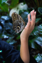 Brown Butterfly Sit On Female Beautiful Hand