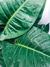 Adventure Nature Background Of Green Tropical Palm Leaves Concept Of Spa, Travel, Vocation Summer