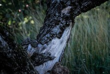 Close-up Of Tree Trunk By Rocks In Forest