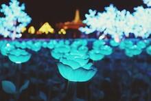 Close-up Of Illuminated Plant At Night