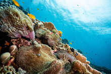 Stunning View Of The Coral Reef Slope During The Sunny Day In Tropical Weather