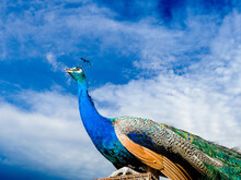 Low Angle View Of A Bird Flying Over Blue Sky