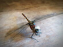 Close-up Of Dragonfly On Wooden Table