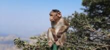 Monkey Looking Away Against Sky