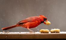 Close-up Of Bird Eating Peanut On Railing