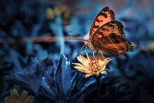 Butterfly Sucking Nectrar On Yellow Flower