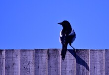 Low Angle View Of Bird Perching On Wood Against Blue Sky