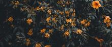 Soft Moody Cinematic Shot Of Orange Flowering Plants In Dark Garden