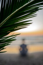 Close-up Of Palm Tree Against Sky During Sunset