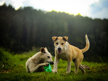Two Dog And Nature