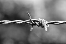Close-up Of Barbed Wire In Black And White