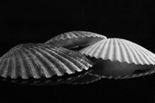 Close-up Of Seashells Against Black Background