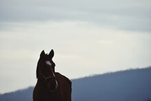 Horse Head With Soft Sky In The Background