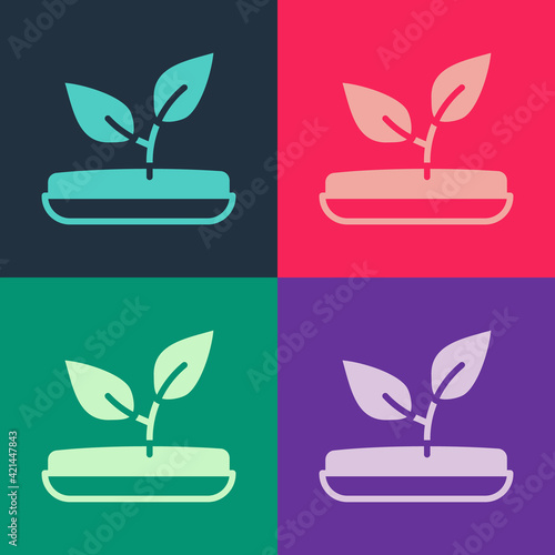 Fototapeta Pop art Sprout icon isolated on color background. Seed and seedling. Leaves sign. Leaf nature. Vector obraz