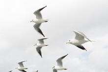 Seagulls Flying Sky