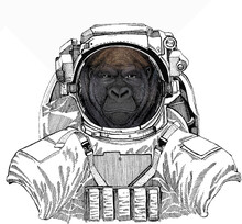 Wild Astronaut Animal In Spacesuit. Deep Space. Galaxy. Gorilla Head. Vector Illustration. Wild Animal Portrait.