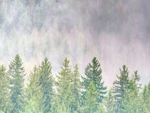Misty View. Misty Landscape With Fir Forest In Hipster Vintage Retro Style