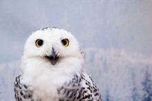 Close-up Portrait Of Owl