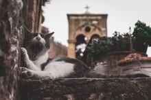 Cat Yawning At Monemvassia