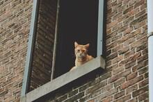 Portrait Of A Cat In A Window