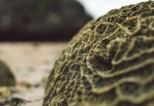 Close-up Of Dead Coral On The Beach