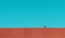 Bird On Roof Of Building Against Blue Sky
