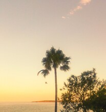 Silhouette Palm Tree By Sea Against Sky At Sunset