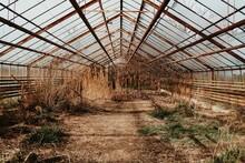 Abandoned Dark Magical Greenhouse