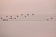 A Birds Symphony