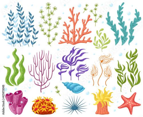 Obraz na płótnie Cartoon ocean plants