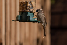 Bird Eating Seed From Garden Feeder