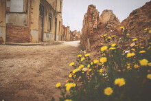 Yellow Flowering Plants By Ruined Building Gainst Sky