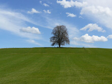 Closeup Shot Of A Lone Tree In The Middle Of The Green Field