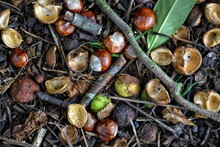 High Angle View Of Conkers
