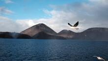 Seagull Flying Over Lake Against Sky